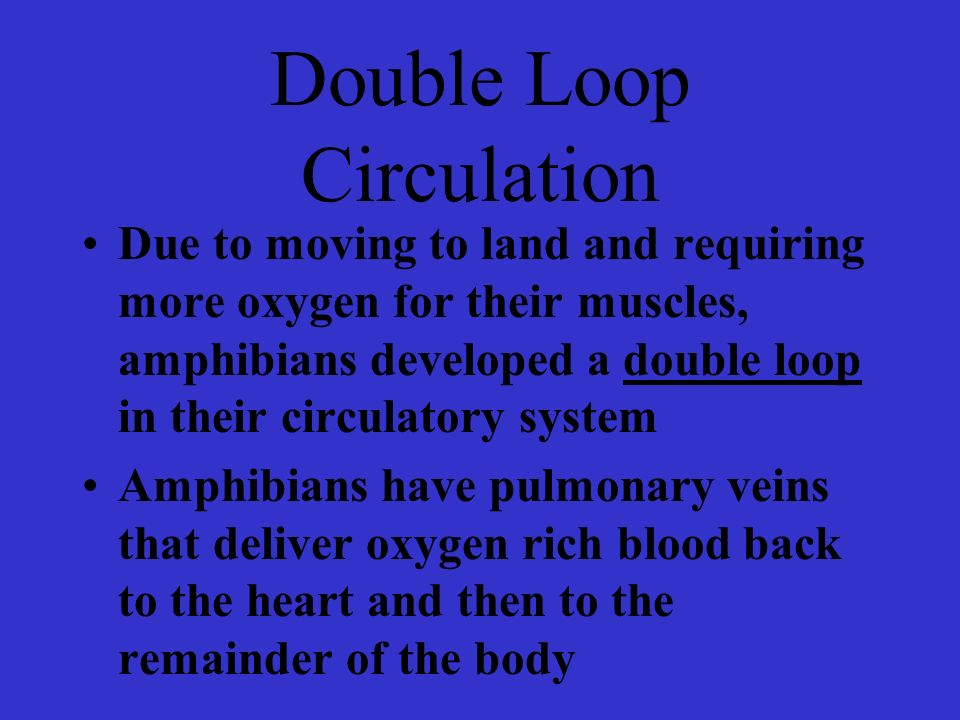 Double Loop Circulation