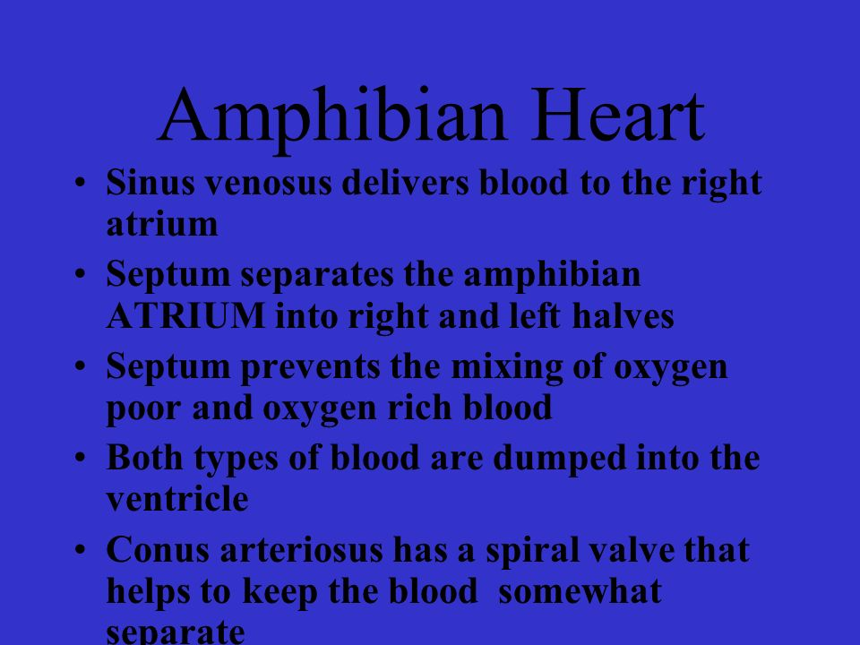Amphibian Heart Sinus venosus delivers blood to the right atrium