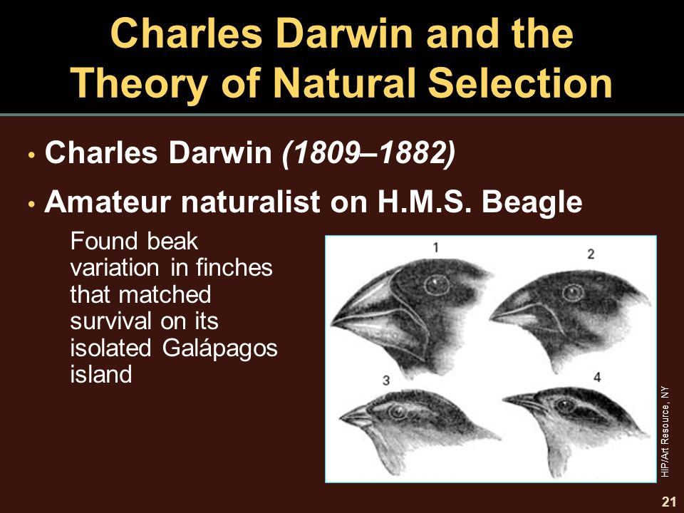 an analysis of charles darwins theory of evolution by natural and sexual selection Darwin's views on and scientific method  he had the mixed fortune of introducing his theory of evolution through natural selection at  d sexual selection .