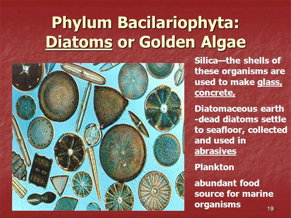 Phylum Bacilariophyta: Diatoms or Golden Algae