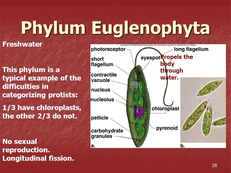 Phylum Euglenophyta Freshwater