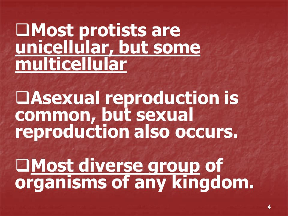 Most protists are unicellular, but some multicellular
