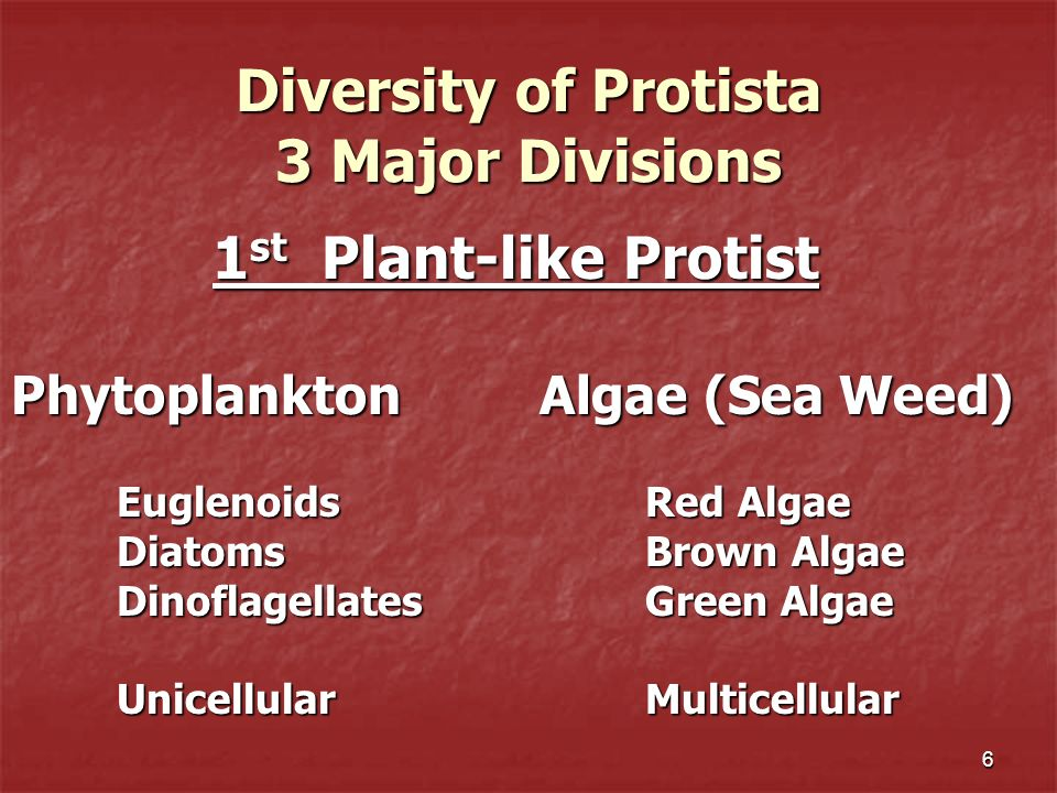 Diversity of Protista 3 Major Divisions
