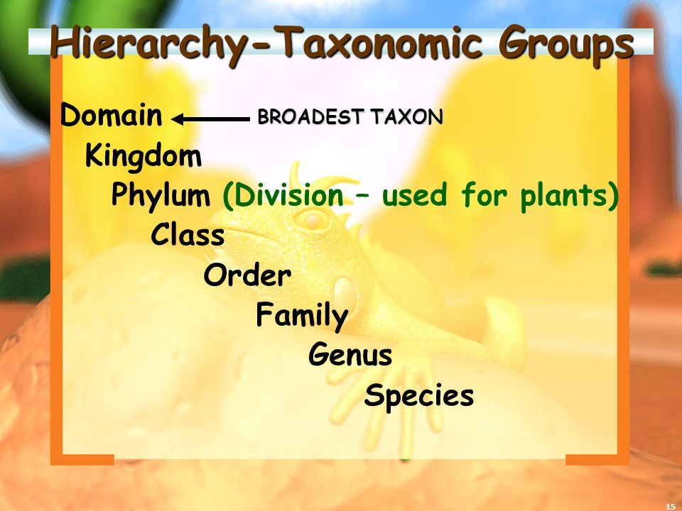 Hierarchy-Taxonomic Groups