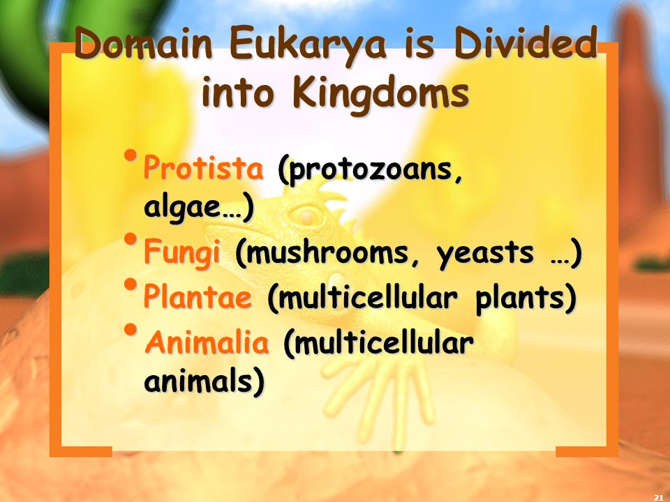 Domain Eukarya is Divided into Kingdoms
