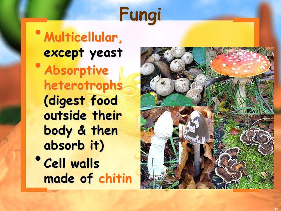Fungi Multicellular, except yeast