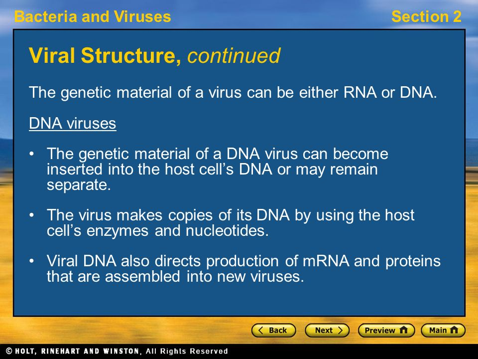Viral Structure, continued
