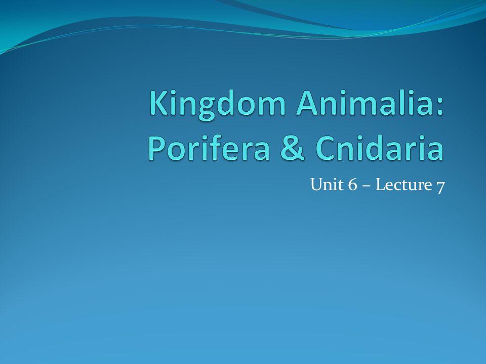 Kingdom Animalia: Porifera & Cnidaria