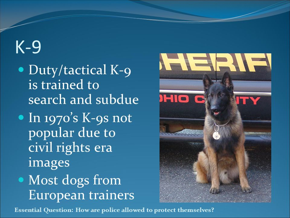 K-9 Duty/tactical K-9 is trained to search and subdue