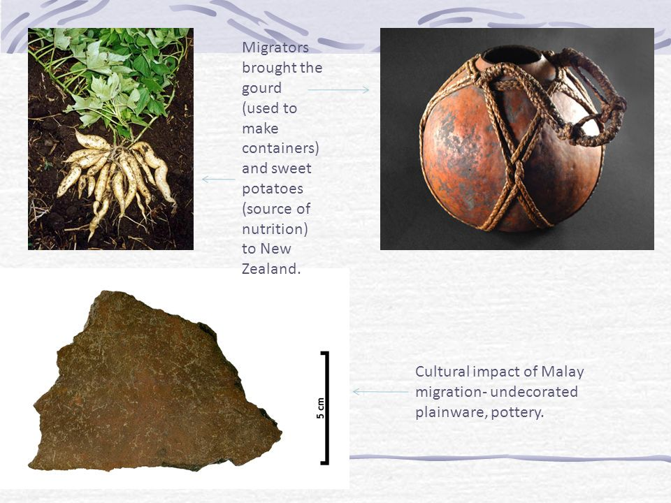 Migrators brought the gourd (used to make containers) and sweet potatoes (source of nutrition) to New Zealand.