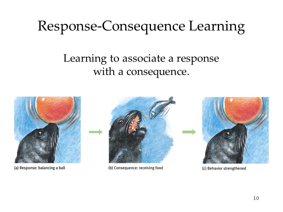 Response-Consequence Learning