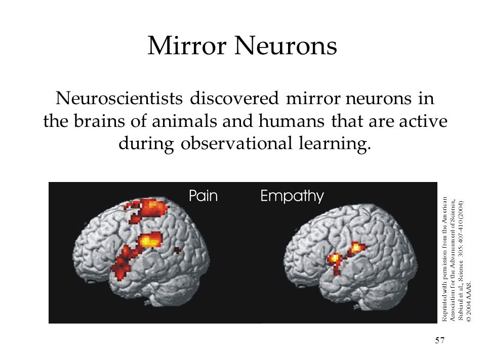 Mirror Neurons Neuroscientists discovered mirror neurons in the brains of animals and humans that are active during observational learning.