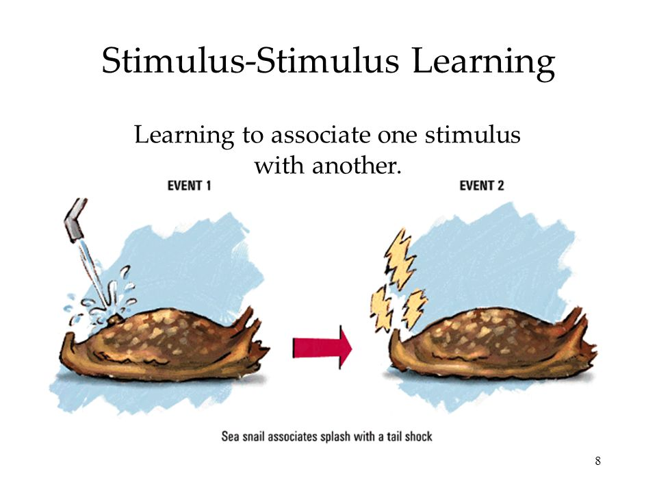 Stimulus-Stimulus Learning