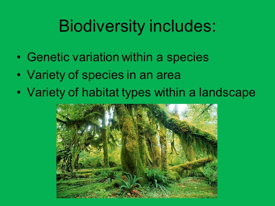 Biodiversity includes: