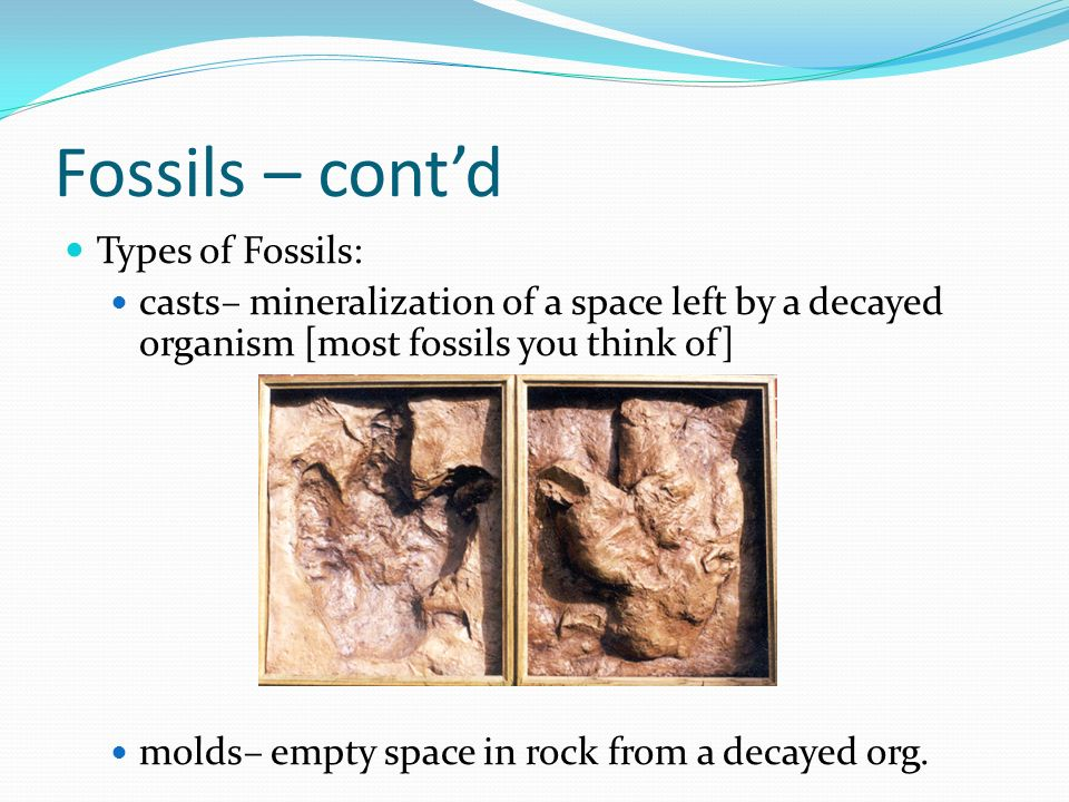 Fossils – cont'd Types of Fossils: