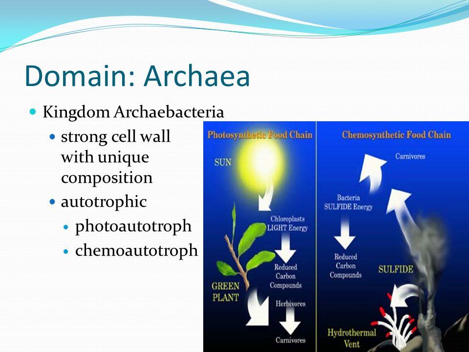 Domain: Archaea Kingdom Archaebacteria