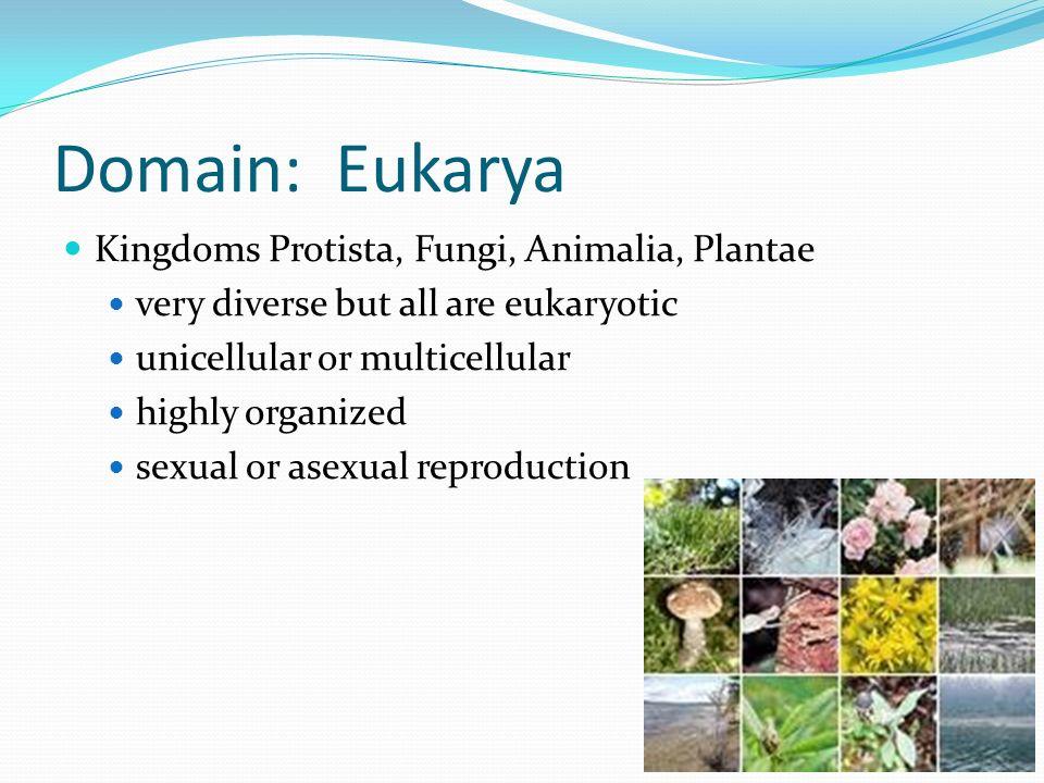 Domain: Eukarya Kingdoms Protista, Fungi, Animalia, Plantae