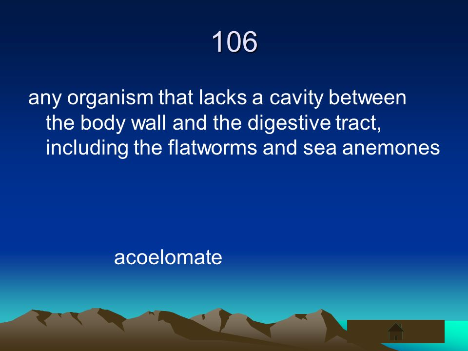 106any organism that lacks a cavity between the body wall and the digestive tract, including the flatworms and sea anemones.
