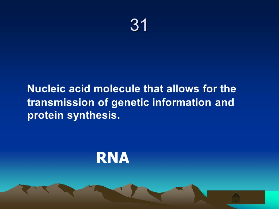 31 Nucleic acid molecule that allows for the transmission of genetic information and protein synthesis.