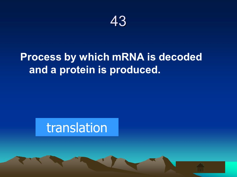 43 Process by which mRNA is decoded and a protein is produced. translation