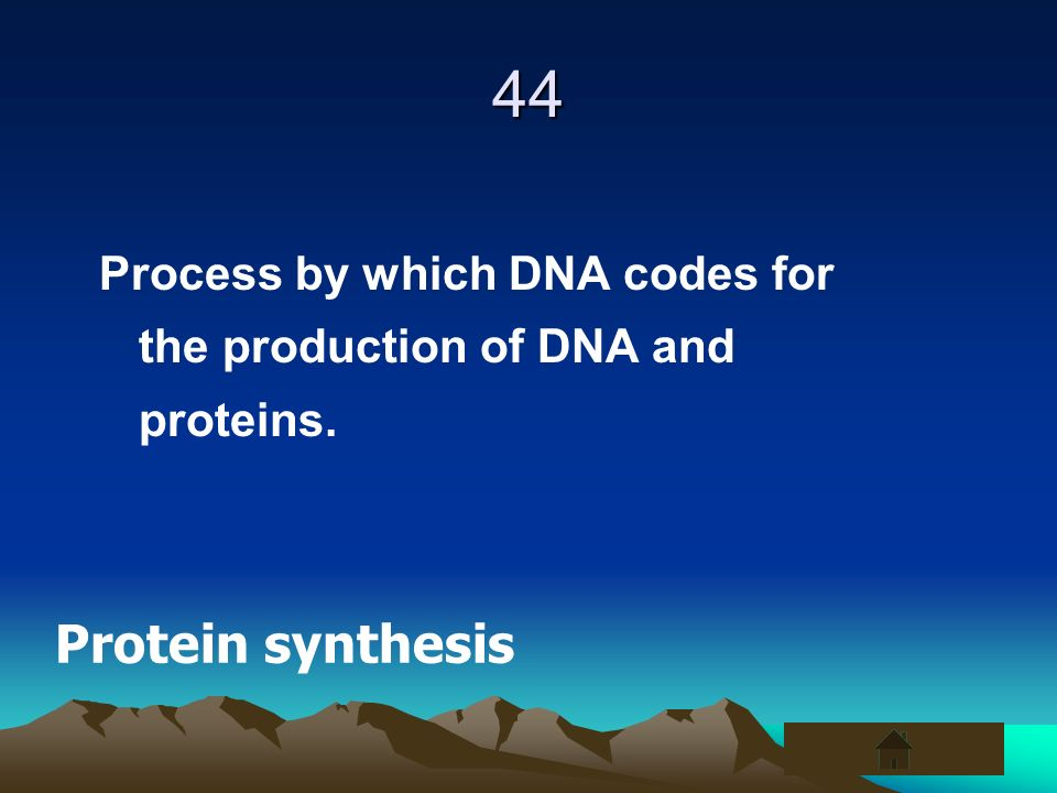 44 Process by which DNA codes for the production of DNA and proteins. Protein synthesis
