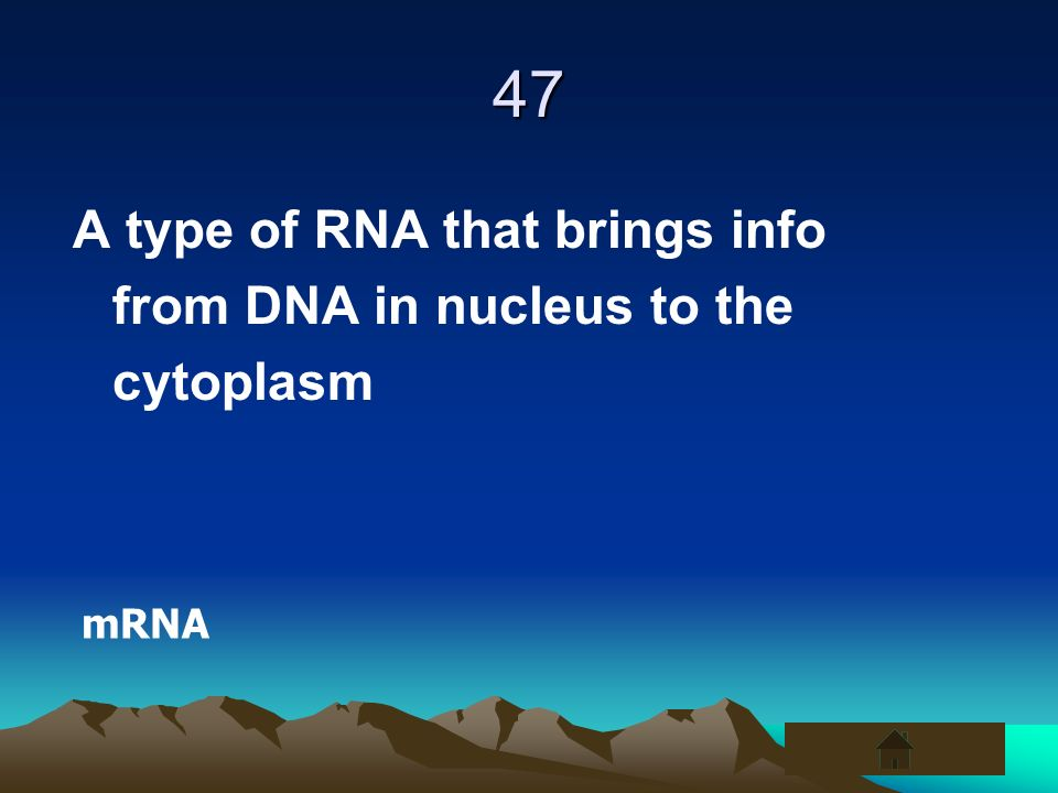 47 A type of RNA that brings info from DNA in nucleus to the cytoplasm