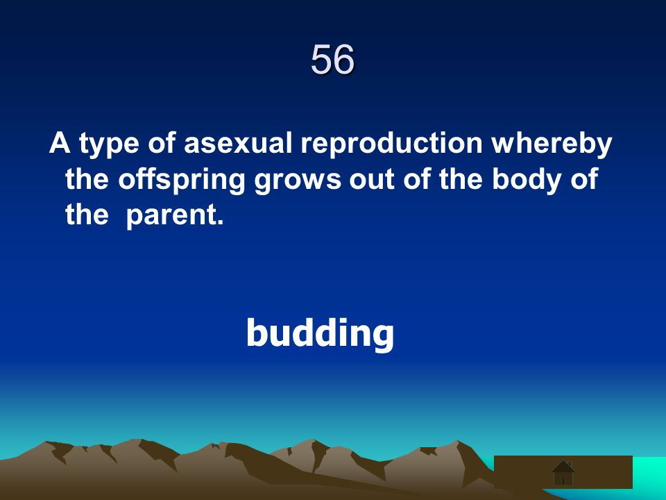 56 A type of asexual reproduction whereby the offspring grows out of the body of the parent.