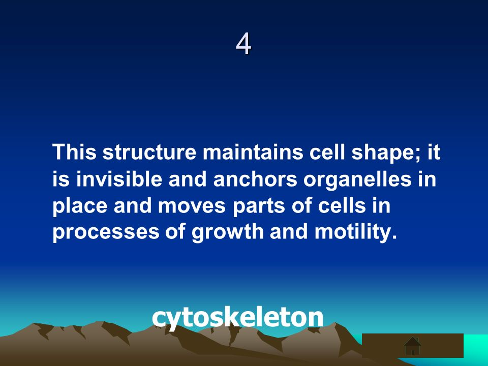 4 This structure maintains cell shape; it is invisible and anchors organelles in place and moves parts of cells in processes of growth and motility.
