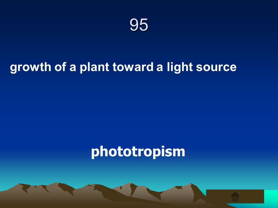 95 growth of a plant toward a light source phototropism