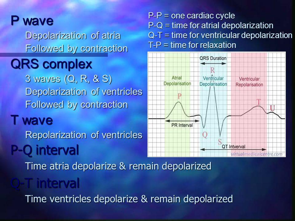 P wave QRS complex T wave P-Q interval Q-T interval