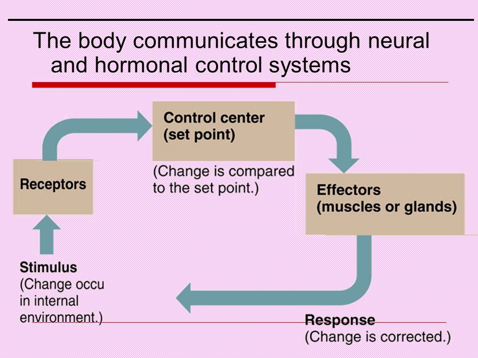 The body communicates through neural and hormonal control systems