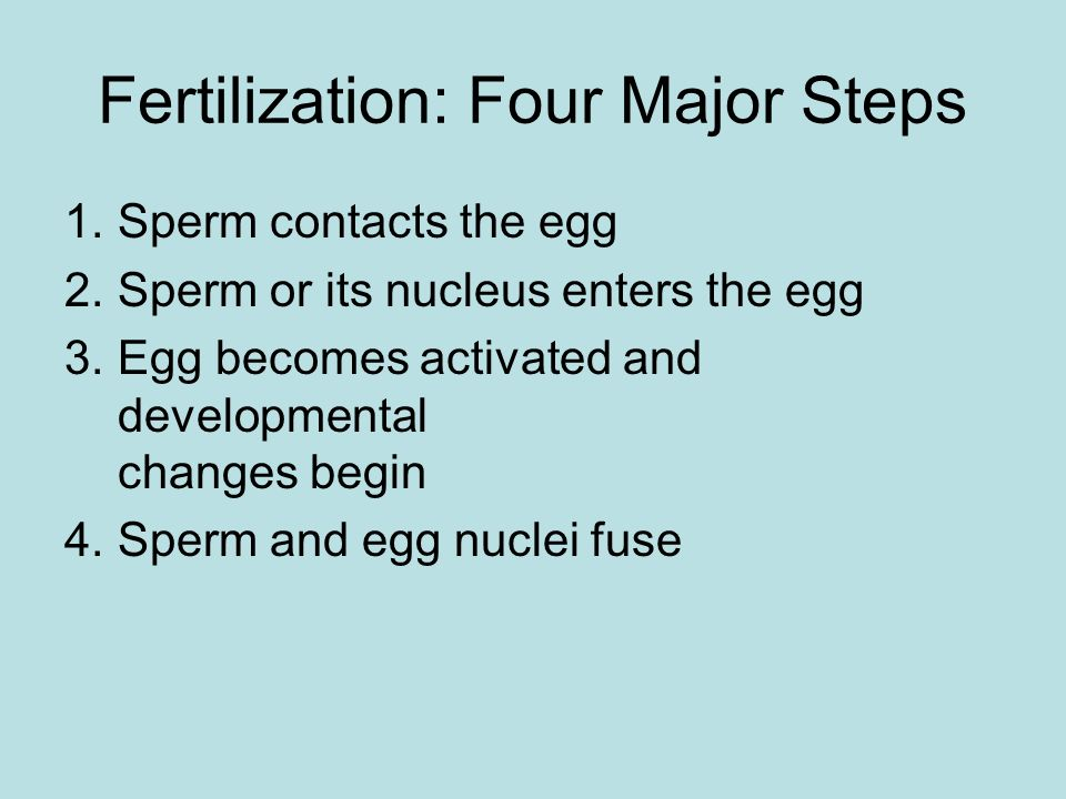 Fertilization: Four Major Steps