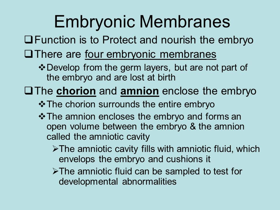 Embryonic Membranes Function is to Protect and nourish the embryo