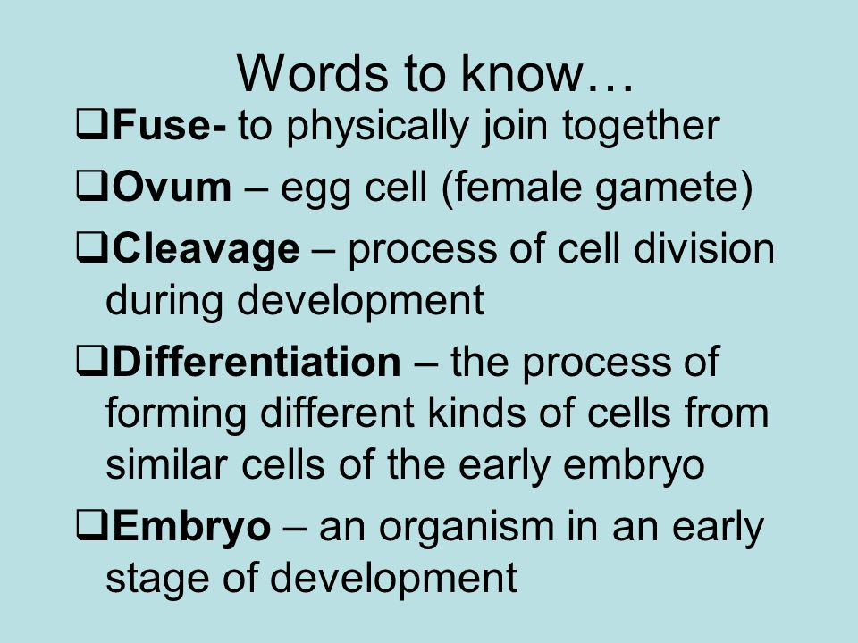 Words to know… Fuse- to physically join together