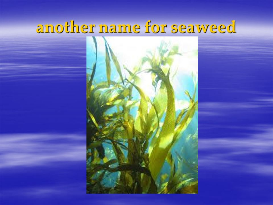 another name for seaweed