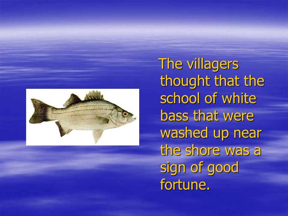 The villagers thought that the school of white bass that were washed up near the shore was a sign of good fortune.