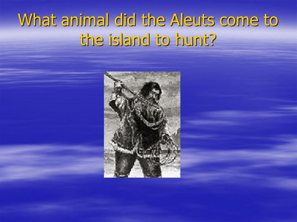 What animal did the Aleuts come to the island to hunt