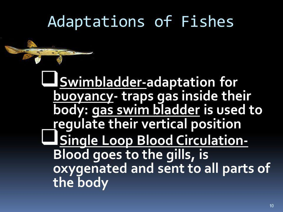 Adaptations of Fishes
