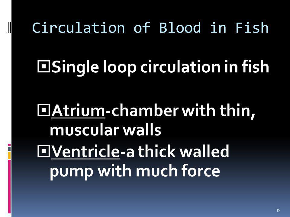 Circulation of Blood in Fish