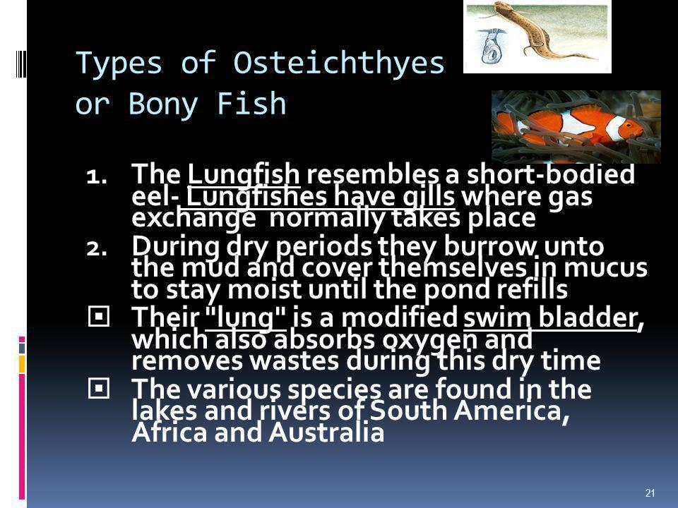 Types of Osteichthyes or Bony Fish