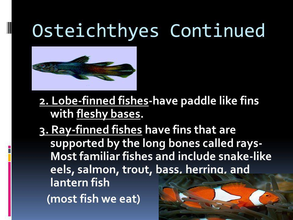 Osteichthyes Continued