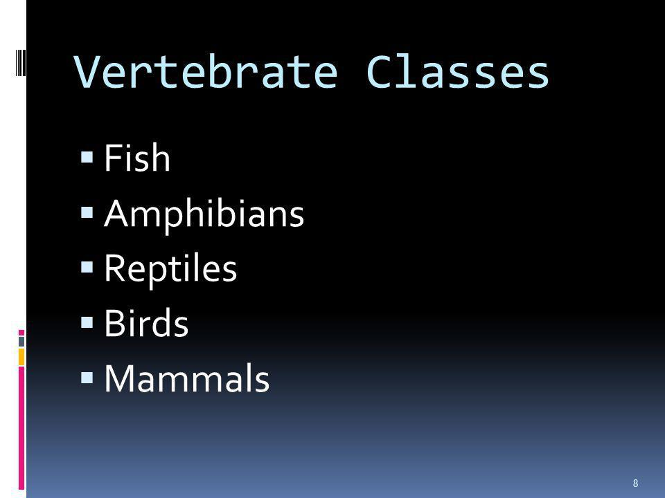 Vertebrate Classes Fish Amphibians Reptiles Birds Mammals