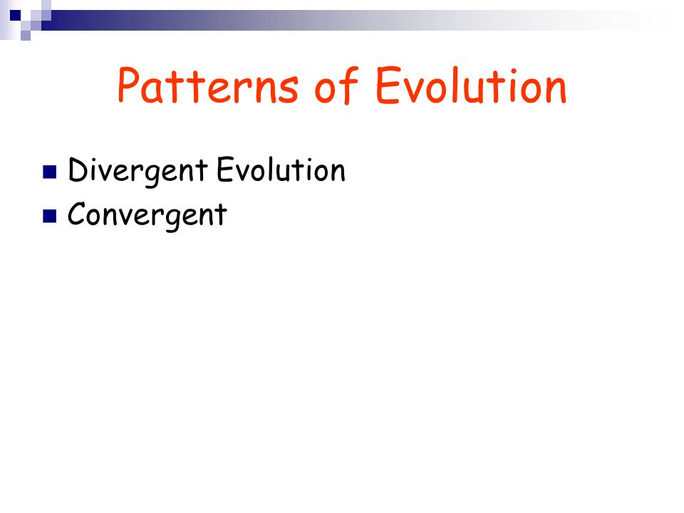 Patterns of Evolution Divergent Evolution Convergent