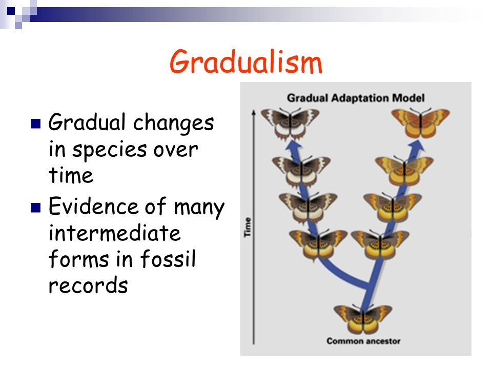 Gradualism Gradual changes in species over time