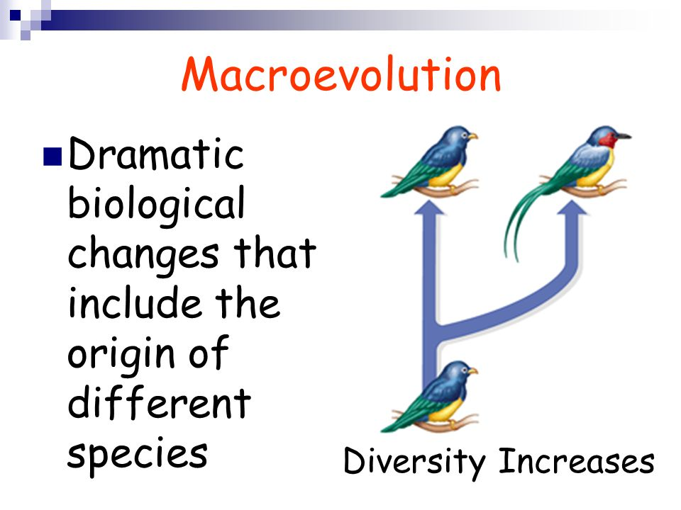 Macroevolution Dramatic biological changes that include the origin of different species.