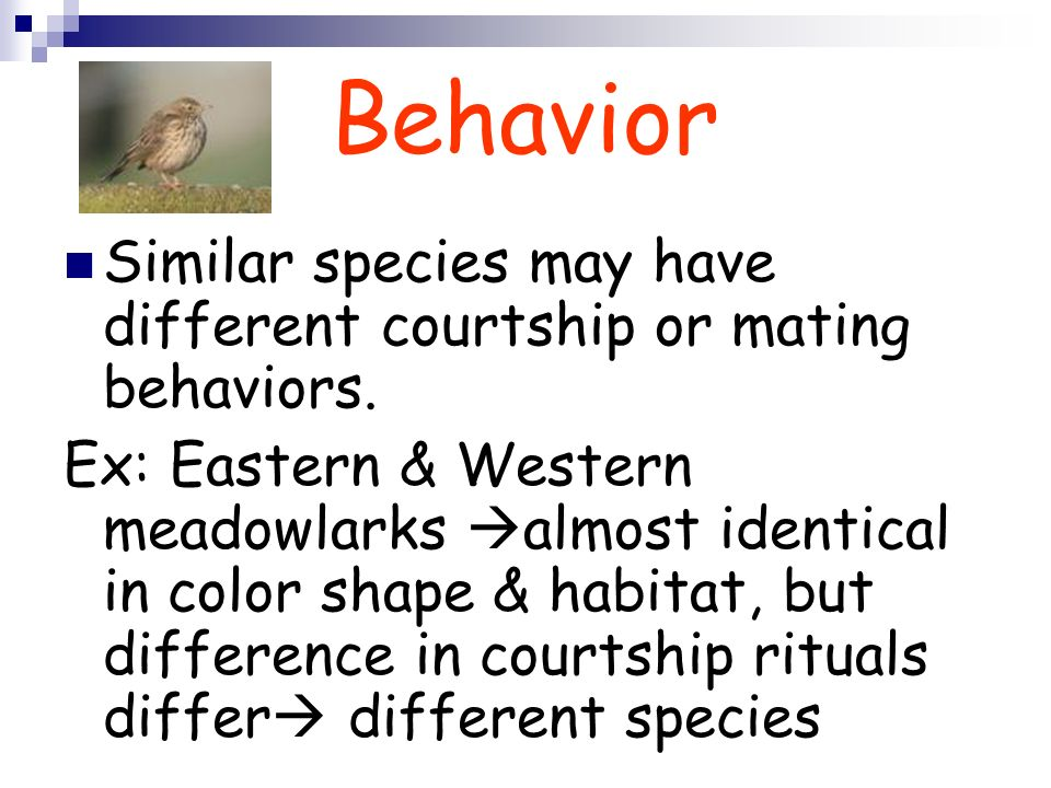 Behavior Similar species may have different courtship or mating behaviors.
