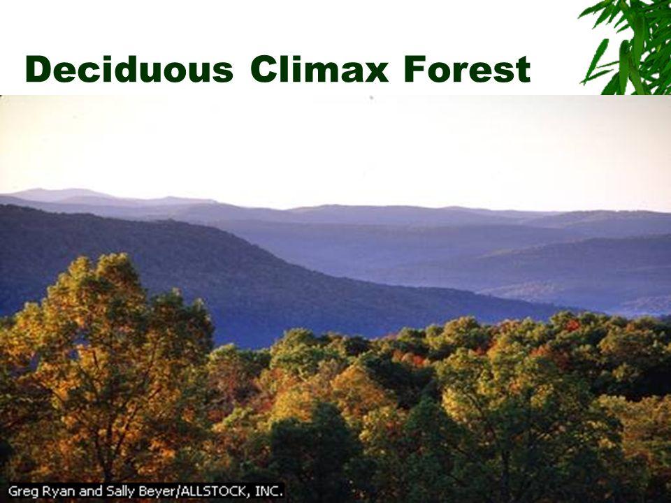 Deciduous Climax Forest