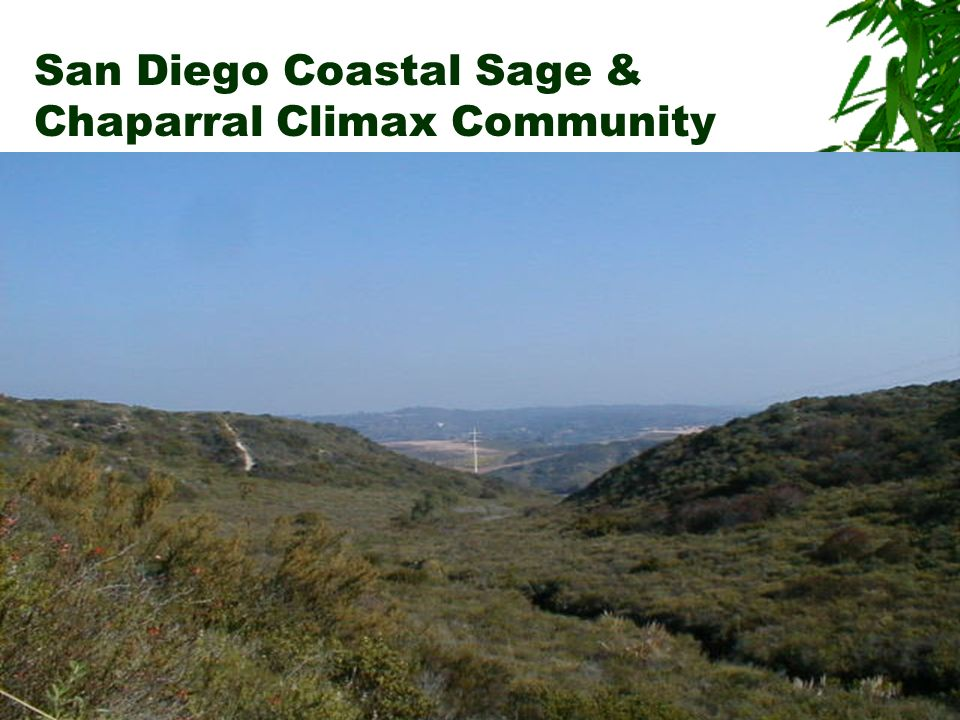 San Diego Coastal Sage & Chaparral Climax Community