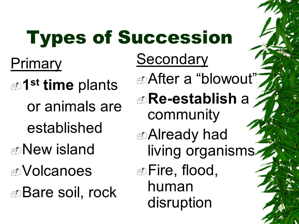 Types of Succession Secondary Primary After a blowout