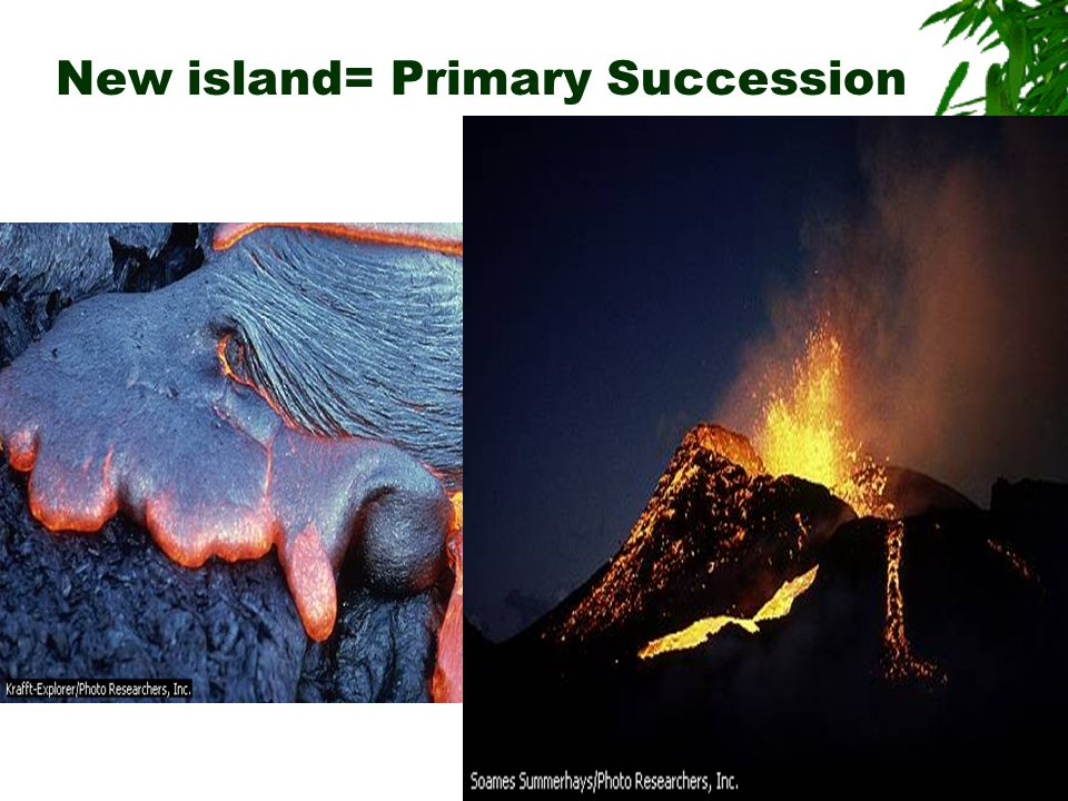 New island= Primary Succession